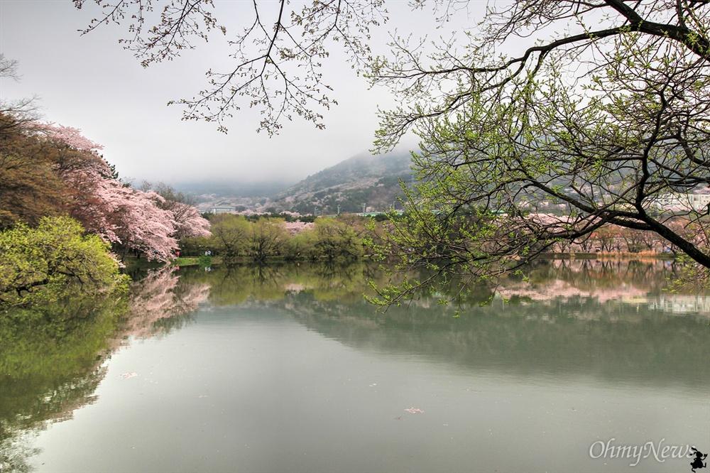 명경지수는 여기가 으뜸, 진해 내수면환경생태공원. 벚꽃 핀 주변의 모든 풍경이 물 위에 비치는 진기한 풍경은 명불허전(名不虛傳)이 되고도 남음이다.