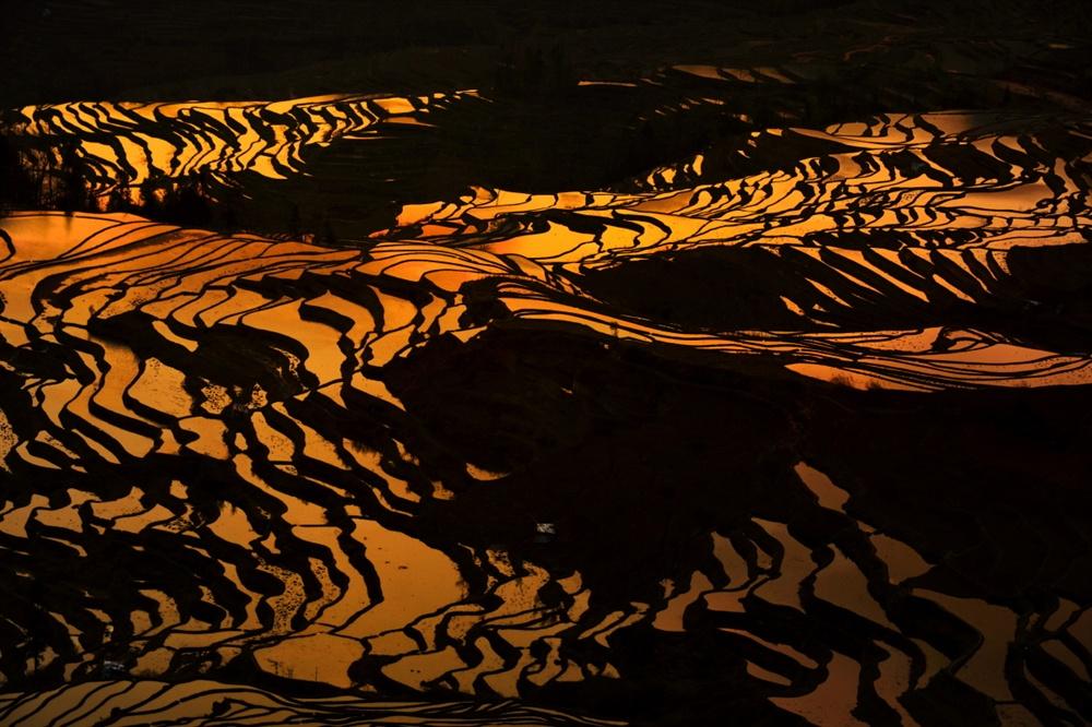 산등성이로 해가 솟자 다랑이논은 금세 황금빛으로 변했다.