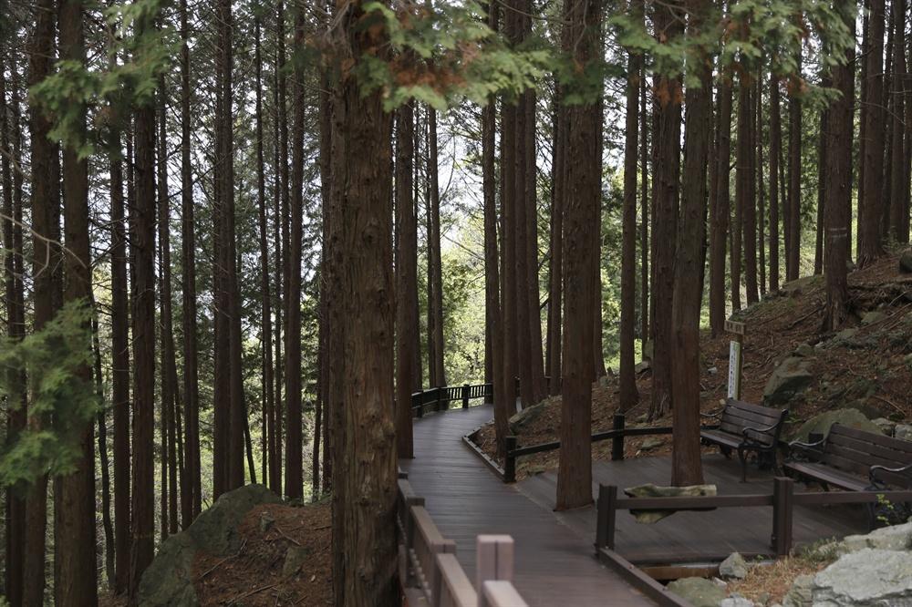 장흥 억불산은 편백과 삼나무로 숲을 이루고 있다. 숲 사이 군데군데에 쉼터도 놓여 있어 잠시 쉬면서 '편백샤워'를 하기에도 좋다.