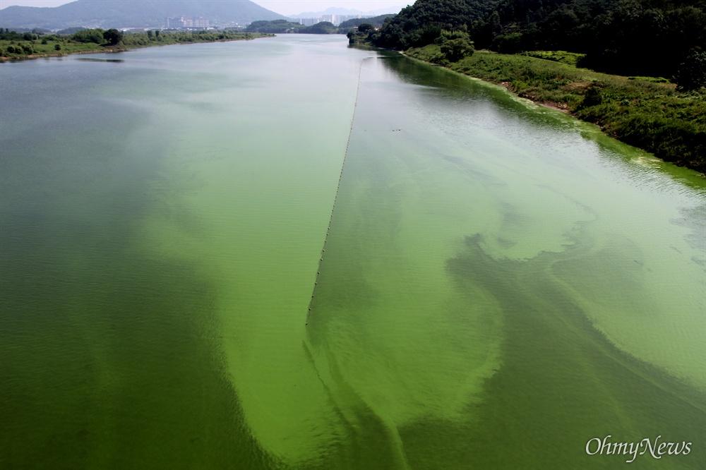 7월 6일 낙동강 합천창녕보 상류에 있는 경북 고령 우곡교 쪽에 발생한 녹조.