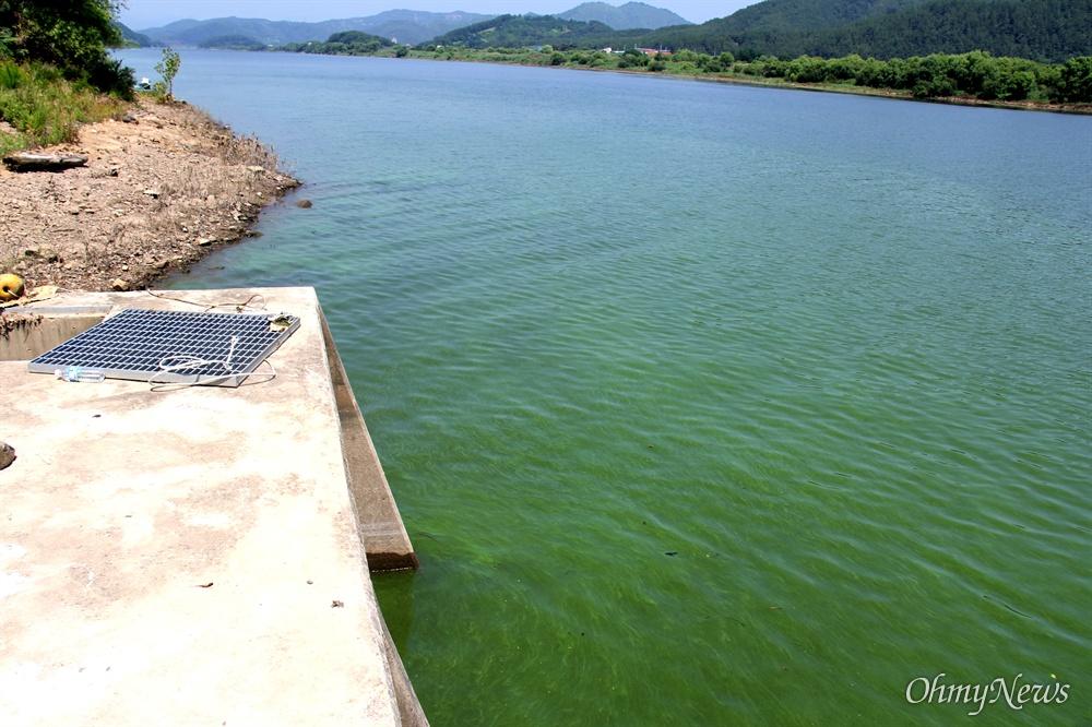 7월 6일 낙동강 합천창녕보 상류에 있는 경북 달성군 현풍면 자모리의 농업 취수구 주변의 녹조.