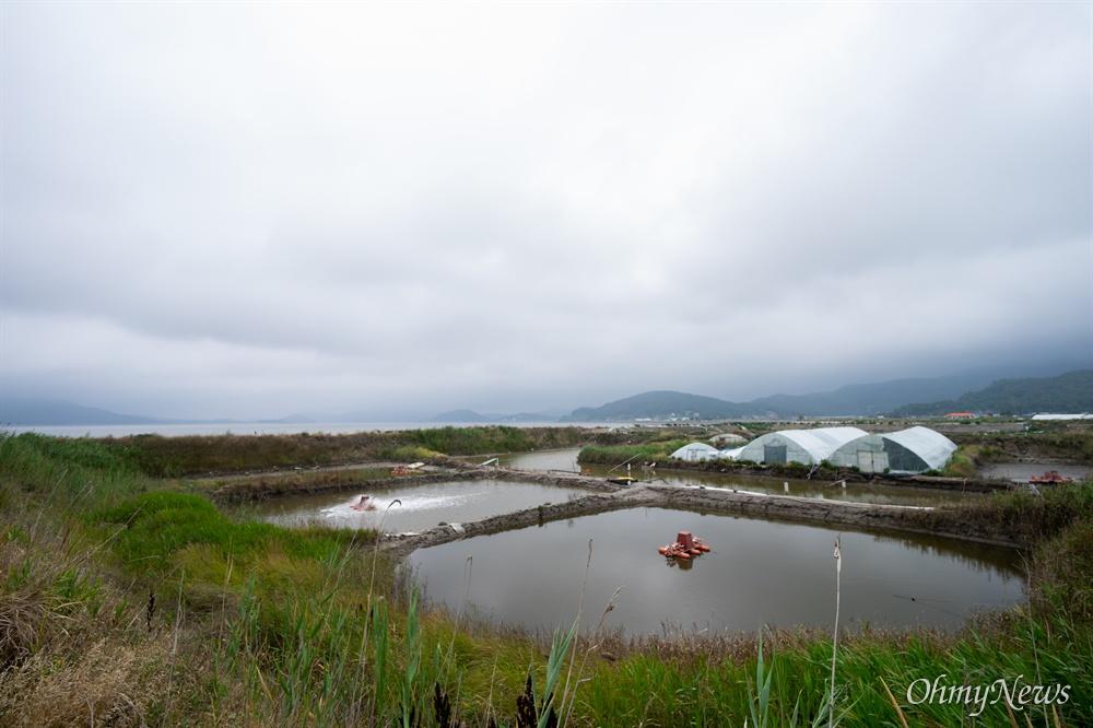 강화 갯벌 장어는 전량 전북에서 받는다. 전북에서 정성스레 키운 장어가 강화 갯벌을 만나면 새로운 맛으로 변신한다. 강화 바닷가 한편에 둑을 만들고 갯벌을 깊게 파서 양식장을 만든다. 거기에 바닷물을 채우고 6개월 동안 물을 순환시키며 천연 갯벌과 비슷한 생태계를 만든다. 6개월쯤 지나면, 1년 이상 키운 장어를 그 양식장 안에 넣어 기른다.