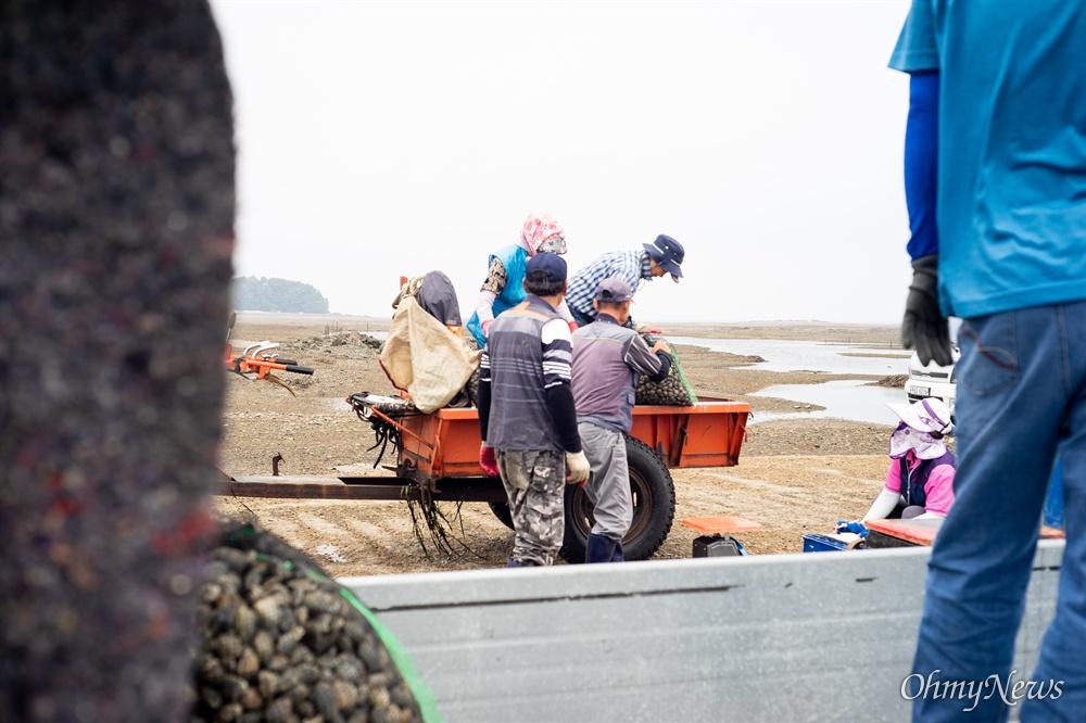 영흥도의 내리 어촌계에서 관리하는 갯벌의 바지락은 일본에 수출할 정도로 맛이 뛰어나다.
