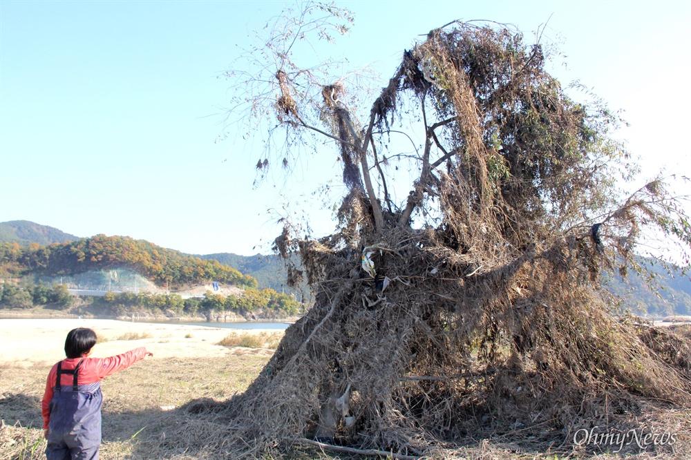낙동강 합천창녕보 하류 둔치의 나무에 풀 등 온갖 쓰레기들이 걸려 있다.