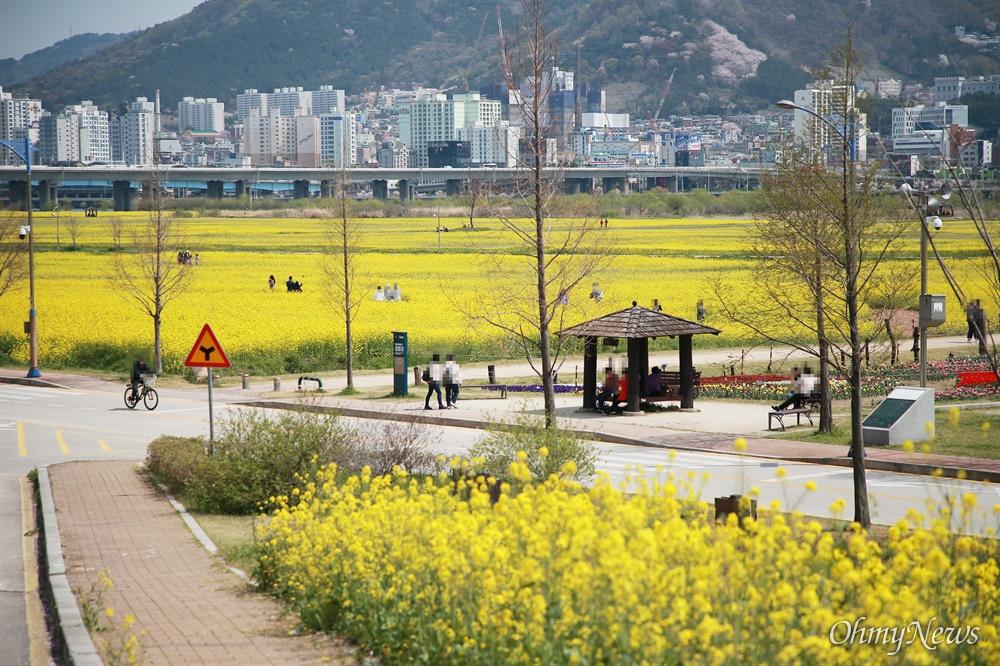 """""""봄은 내년에도 옵니다"""" 대저생태공원 유채꽃밭 파쇄 코로나19로 인한 사회적 거리두기가 한창인 지난 3일 유채꽃이 핀 부산 대저생태공원에 시민들이 모여 있다."""
