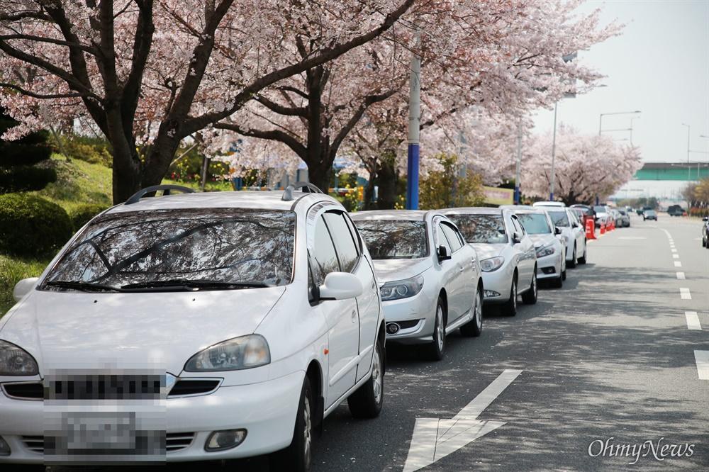 """""""봄은 내년에도 옵니다"""" 대저생태공원 유채꽃밭 파쇄 코로나19로 인한 사회적 거리두기가 한창인 지난 3일 유채꽃이 핀 부산 대저생태공원 입구에 불법 주정차된 차량이 줄을 지어 서 있다."""