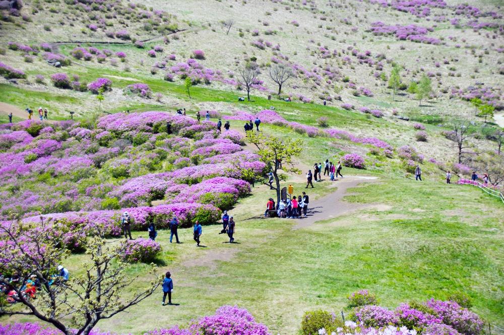 황매산 철쭉군락지에 모인 나들이객들. 워낙 너른 능선이라 산은 사람들을 넉넉히 품어주었다.