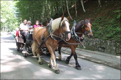 성으로 오르는 길의 관광마차  노이슈반스타인 성에서 내려오는 관광마차