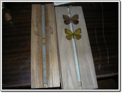 표본장 나비의 표본을 만들 때 쓰던 표본장