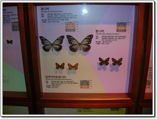 제주 나비의 표본 석주명이 연구해서 이름을 붙였던 제주나비들