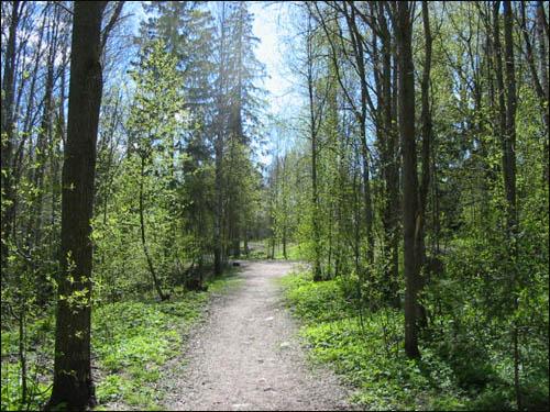 핀란드 숲에 난 오솔길.