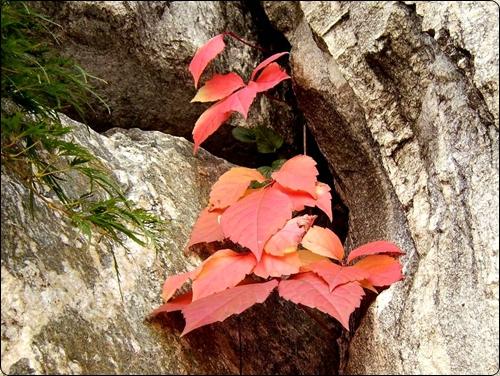 바위틈에서 곱게 물든 나뭇잎의 속삭임을 들어보세요