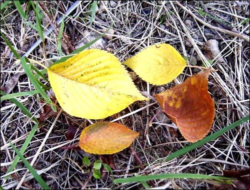 잔디밭 위의 낙엽들