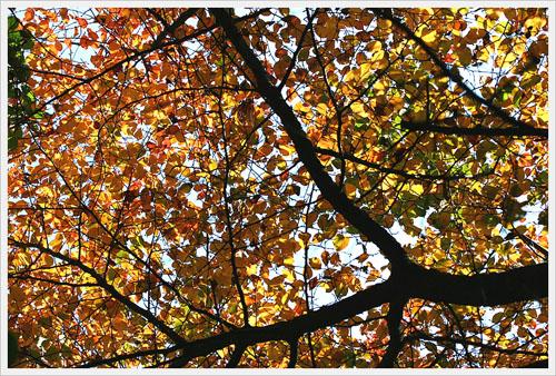가을빛 하룻밤 사이에 물들어 버린듯하다.
