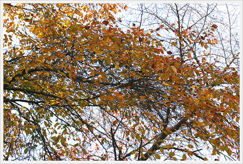 가을빛 다가오는 계절을 준비하는 지혜를 본다.
