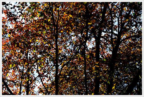 가을빛 숲마다 알록달록 숨겨둔 빛을 내어놓는다.