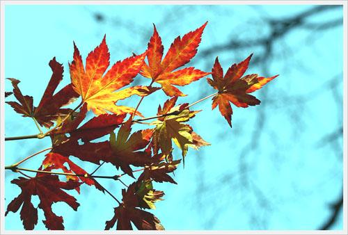 단풍 바다를 닮은 하늘과 하나인 가을빛을 본다.
