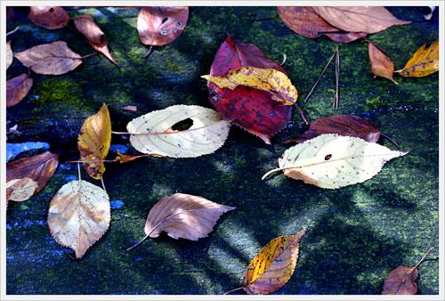 낙엽 떨어진 낙엽은 하나하나 시가 되어 땅에 흩뿌리고