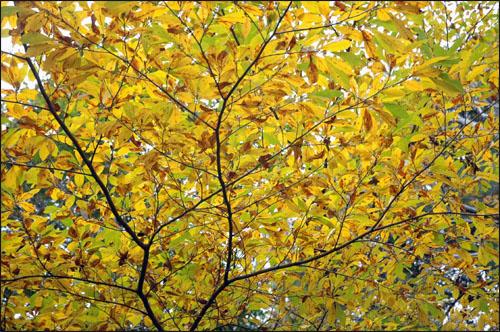 포근함 하늘을 덮어버린 가을