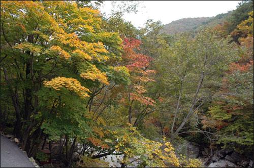 반가움 형형색색의 가을