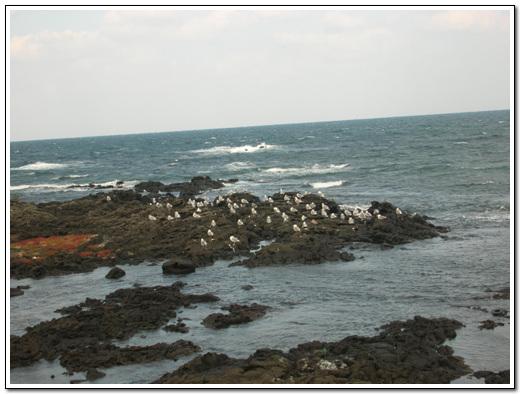 바다갈매기 철새도래지에 도착하기 전에 해안도로에서 갈매기들을 만났다.