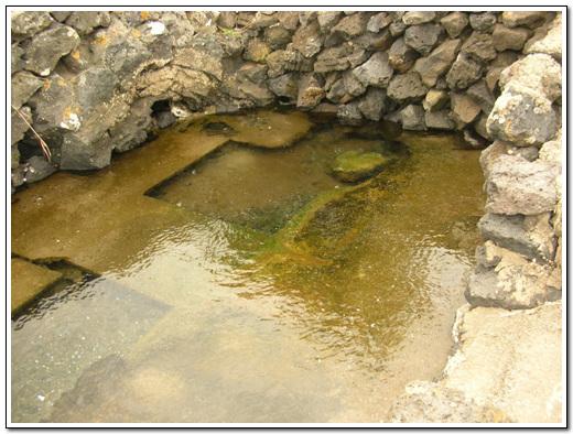 샘물 샘물에서 솟아나는 맑은 담수가 해수와 섞여 최적의 환경을 만든다.