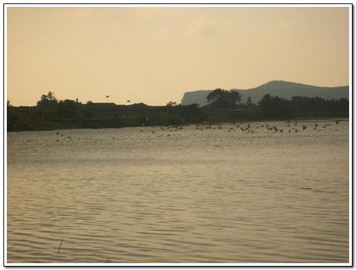 철새도래지 새들이 일제히 나는 장면이다. 뒤에 보이는 봉우리가 두산봉이다.