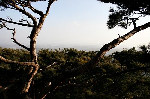 전망대에서 바라본 풍경 솔숲이 아래로 내려다 보이는 풍경이 색다르다.