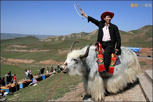 야크 장족이 신성시하는 동물 야크를 타고 기념사진을 찍고 있다