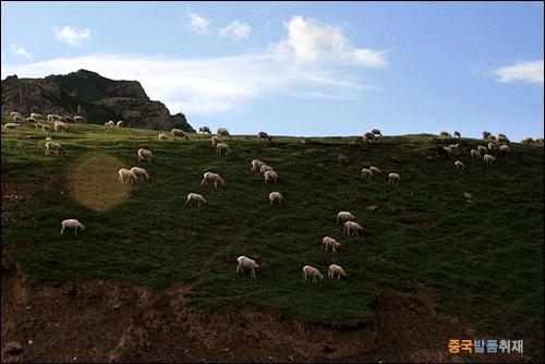 치렌산맥의 양떼들 해발 4000m 이상의 치렌산맥을 넘어가는 중국 227번 국도에서 본 산 능선의 양떼들