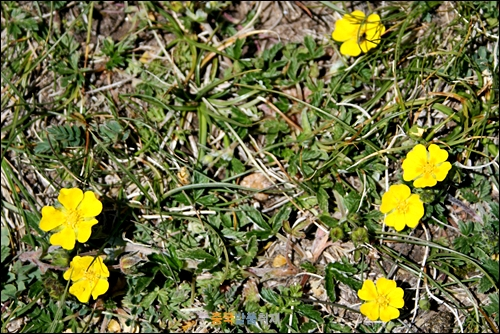 유채꽃 노란 유채꽃이 도로변에 엄청 많이 피어있다