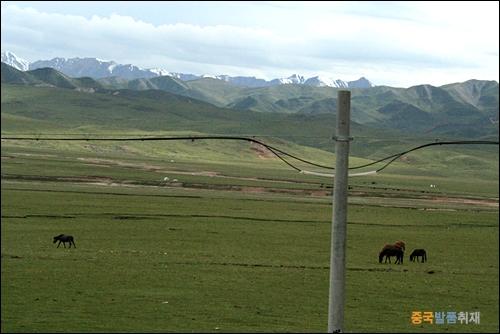설산과 초원 치렌산맥 설산과 넓은 고원지대인 초원의 말