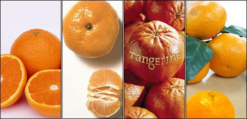 왼쪽부터 오렌지(혹은 어륀지), 사수마, 탠저린, 감귤.
