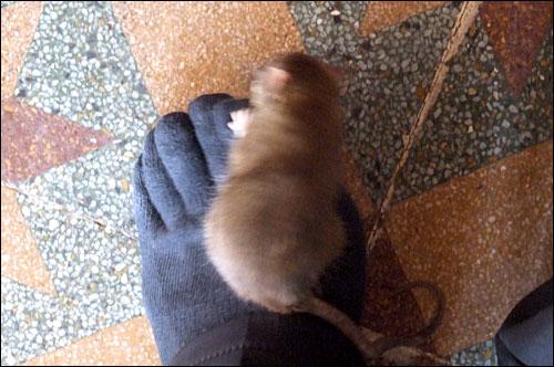 허걱, 쥐 한 마리가 저의 발등위로 올라왔네요.