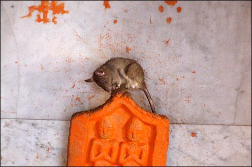 이 곳에서 쥐는 신상 위에도 올라갈 수 있는 자유를 허용 하노라.