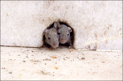 무자년, 새해엔 독자님들 모두에게 '쥐구멍에 볕들 날'이 있을 거예요.