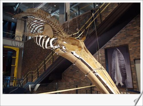 고래의 자취 고래 박물관에 전시된 실제 고래 뼈