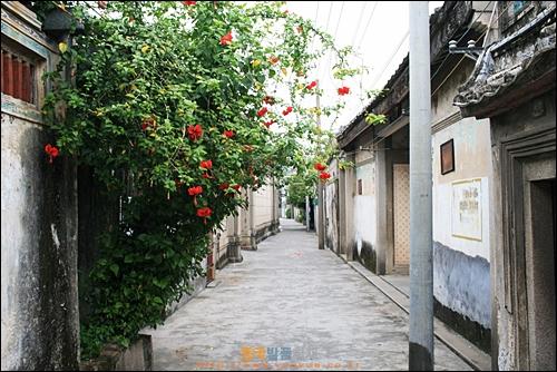 차오저우의 옛 가옥 마을 자띠샹, 담장 너머로 예쁜 꽃들이 피어있다
