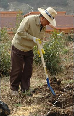노무현 전 대통령은 봉하마을 뒷산 폐과수원에 '장군차' 묘목을 심는 작업을 벌이고 있다.