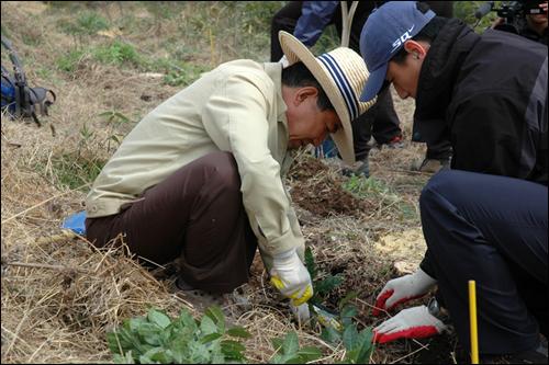 노무현 전 대통령은 노사모 회원과 봉하마을 주민들과 함께 장군차 묘목을 심고 있다.