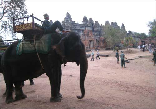 프놈바켕사원을 오르는 코끼리택시 프놈바켕 사원은 야소바르만1세가 새수도 야소다라푸라 시가지 중심 바켕산 정상에 새운 사원이다.