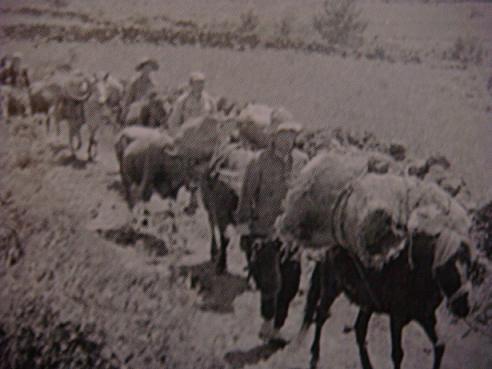 제주 4.3 산에 올랐다가 하산하는 주민들(1948.5). 미국립문서기록관리청 소장 사진이며, 제주 4.3사건 진상조사보고서에 수록된 사진을 찍었다.