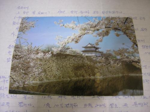스승과 나눈 편지6 일본에서 선생님이 보내신 엽서2. 봄 배경입니다.