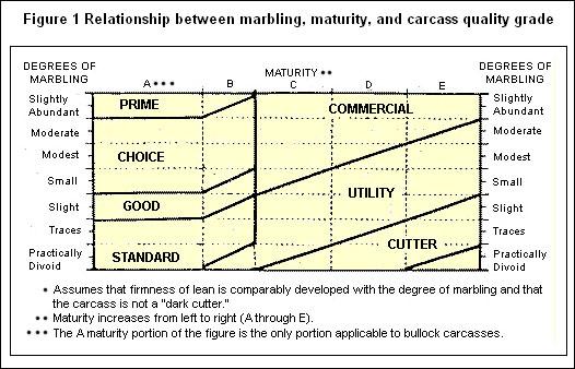 미국의 소고기 육질등급판정 기준표(2007)  왼쪽이 판정부위의 육질을 나타내는 '근내지방도'이며 A~E는 소의 '성숙도(월령)'다. 1~30개월 미만은 성숙도 A, 30~42개월 미만은 성숙도 B다. 성숙도 1~42개월령(성숙도 A, B)범위의 소 중에서 근내지방도를 따져 프라임, 초이스, 셀렉트, 스텐다드 등급(이를 보통 상위 4개 등급이라 부른다)이 주어진다(42개월령 이상은 나머지 4개 등급). 즉 상위 4개 등급은 월령이 B가 되더라도 통과된다. 성숙도는 등급판정사가 등급판정 도중에 기록하지만 유통과정 중에는 최종 8개 등급만 표시되므로 상위 4개 등급표시만으로 30개월 미만을 보장할 수 없다. 그래서 일본은 2005년 대미 소고기 통상에서 '육질'등급이 아닌 20개월 미만이란 월령을 명시했던 것이다.