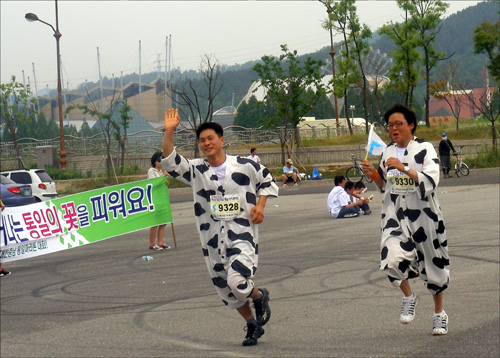 미구간 쇠고기수입 반대를 상징하는 얼룩소 복장을 한 마라톤 참가자가 결승점에 들어서고 있다.