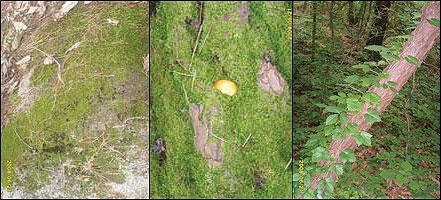 공존 바위과 이끼, 소나무 위의 이끼와 버섯, 소나무와 풀들의 공존