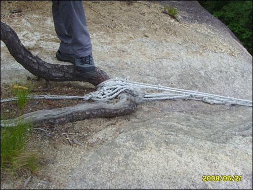 나무에 의지한 밧줄 나무가 보살이었다. 그에 의지한 등산객이 얼마나 많을까?