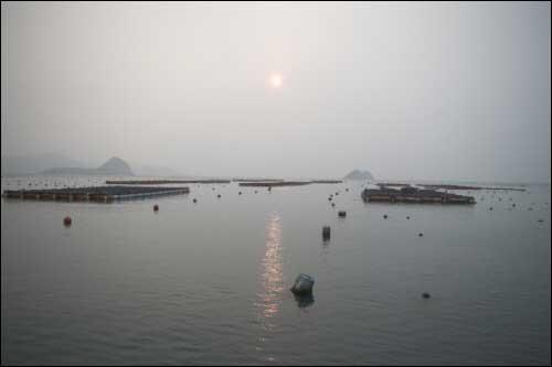 보길도 아침바다 보길도 앞바다 멀리 아침 햇살 사이로 전복 양식장이 보인다.