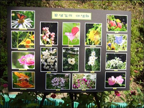 꽃샘길의 야생화들, 사진 전시