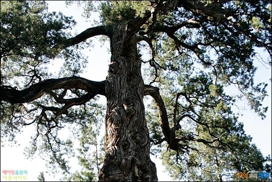 천년고찰 다쥐에쓰에는 수령이 오래된 나무들로 울창하다